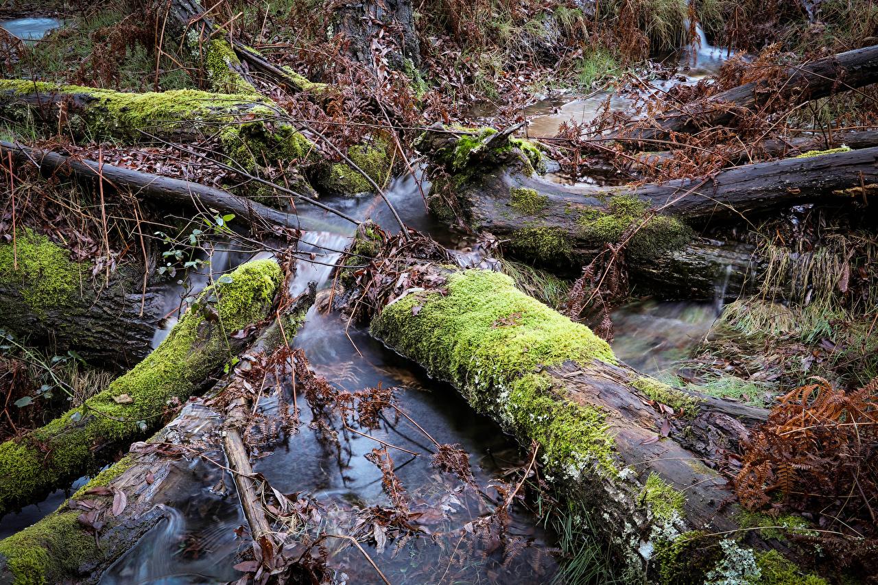 Image Foliage Coimbra Creeks Nature Moss Branches Leaf Creek brook Stream Streams