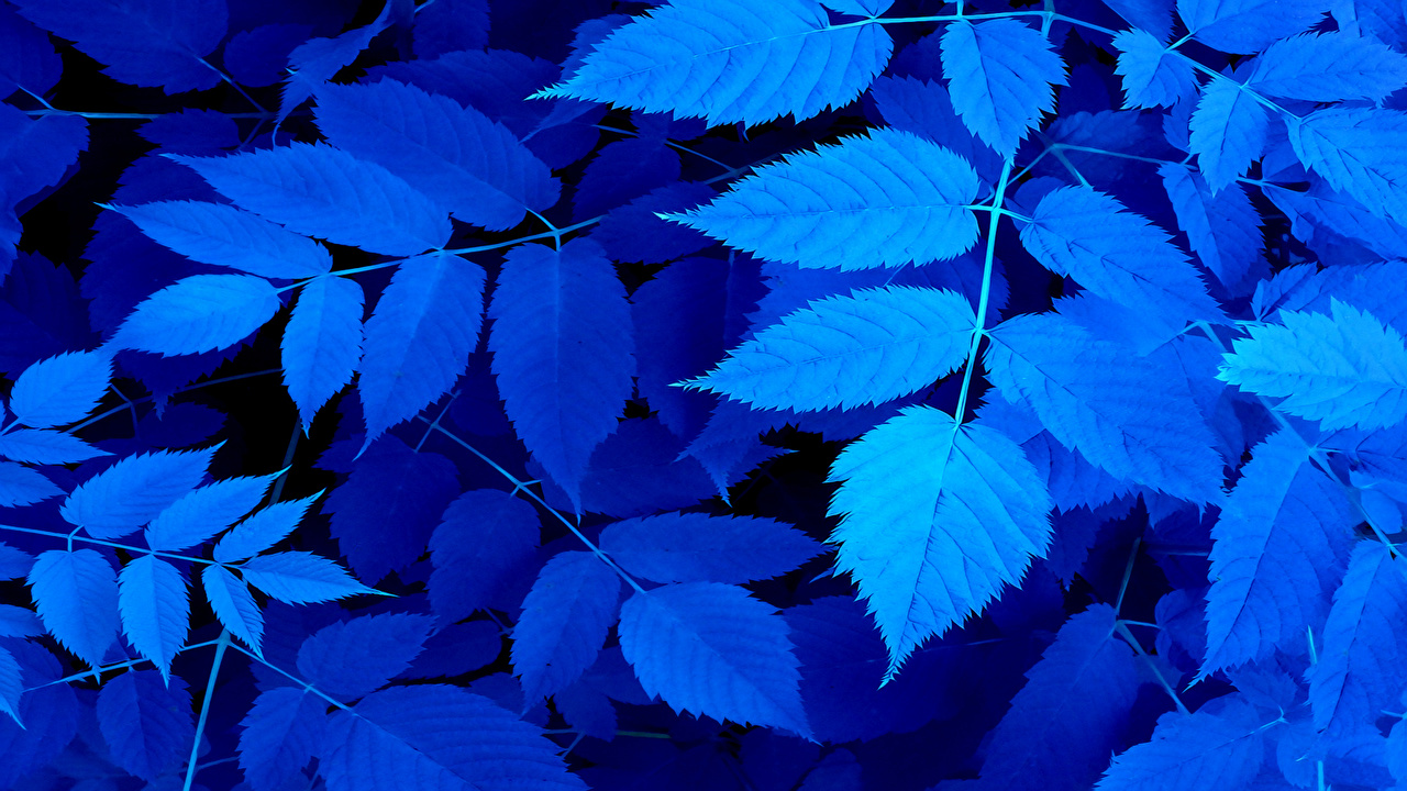 Wallpaper Leaf Blue Nature Branches