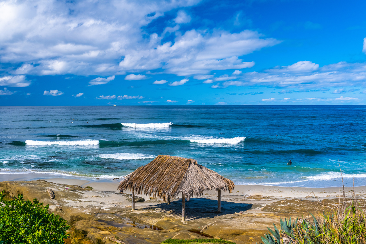 Image California USA Windandsea Beach beaches Nature Coast