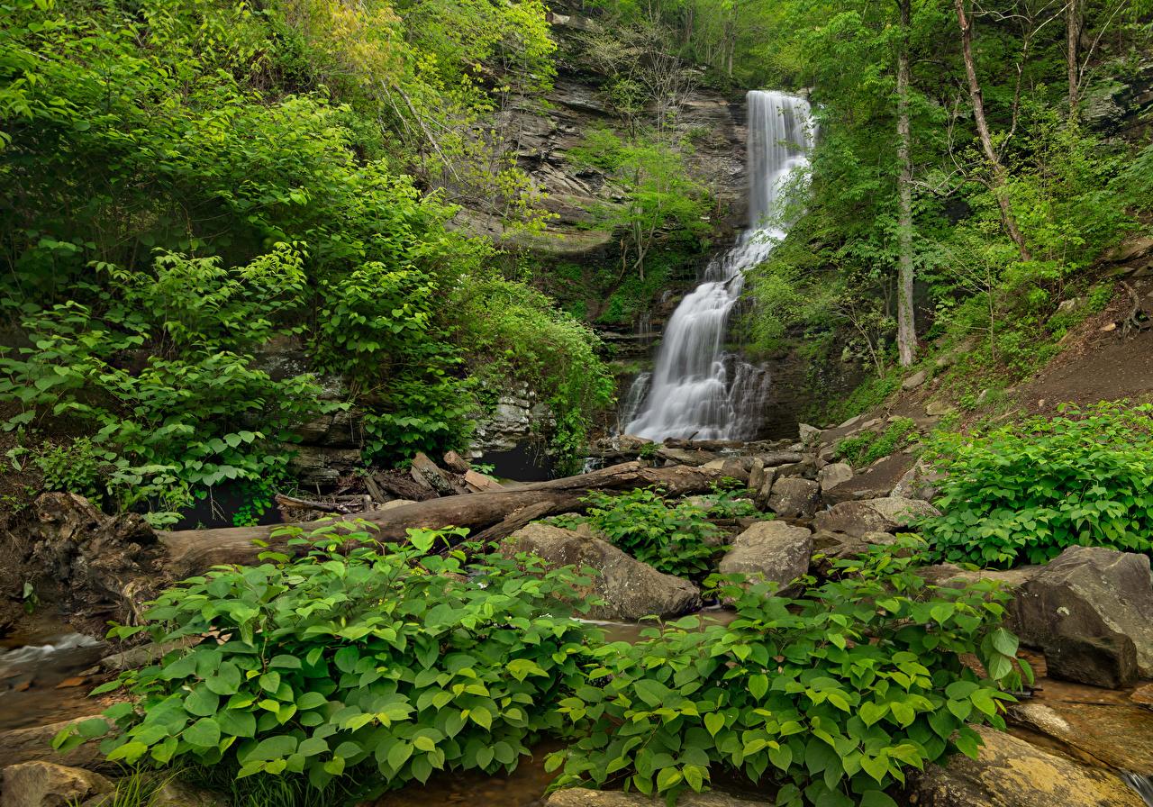 Desktop Hintergrundbilder USA Blackwater Falls State Park Virginia Natur Felsen Wasserfall Steine Strauch Vereinigte Staaten Parks Stein