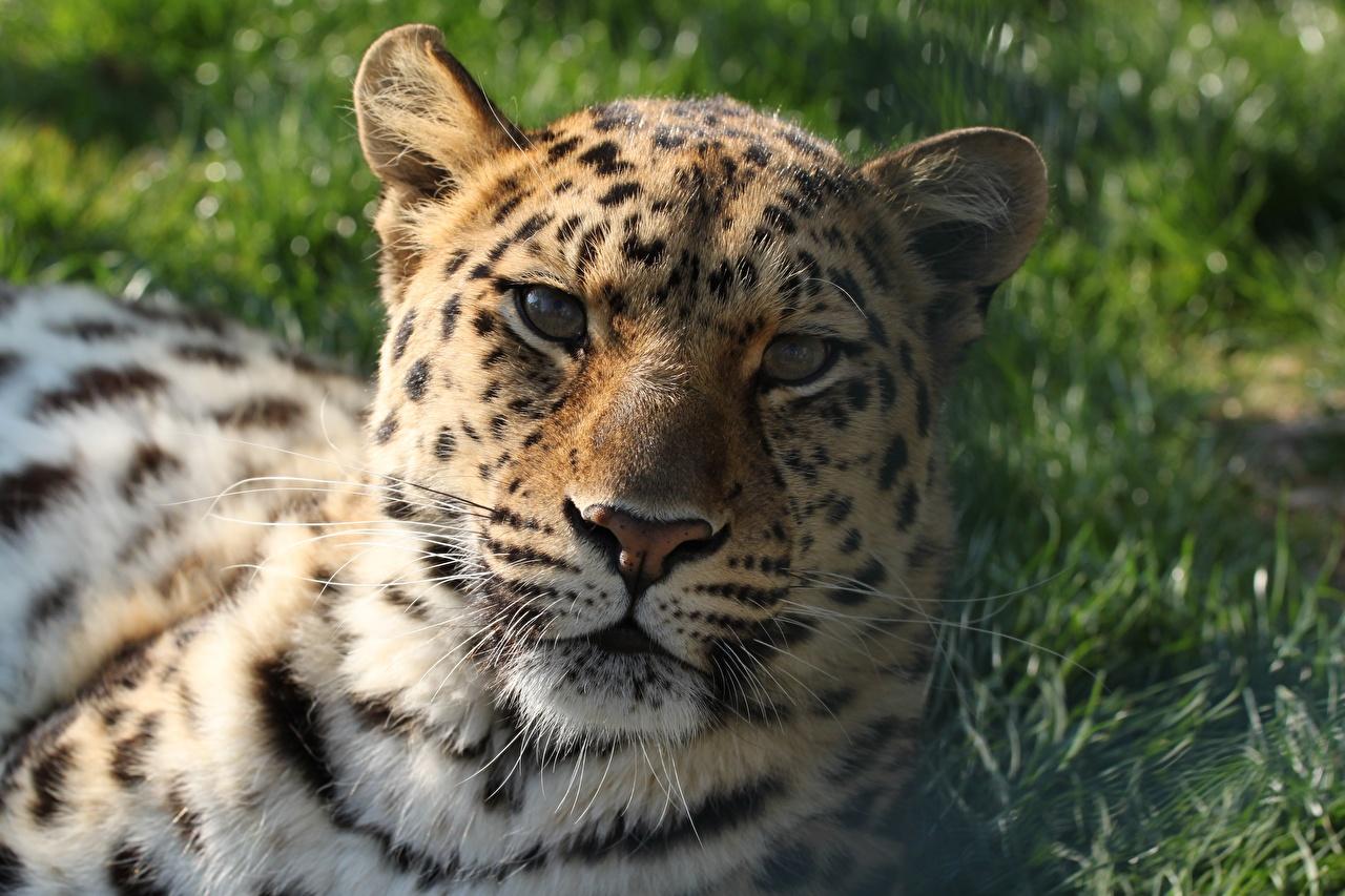 De cerca Cabeza Contacto visual Hocico animales, un animal Animalia