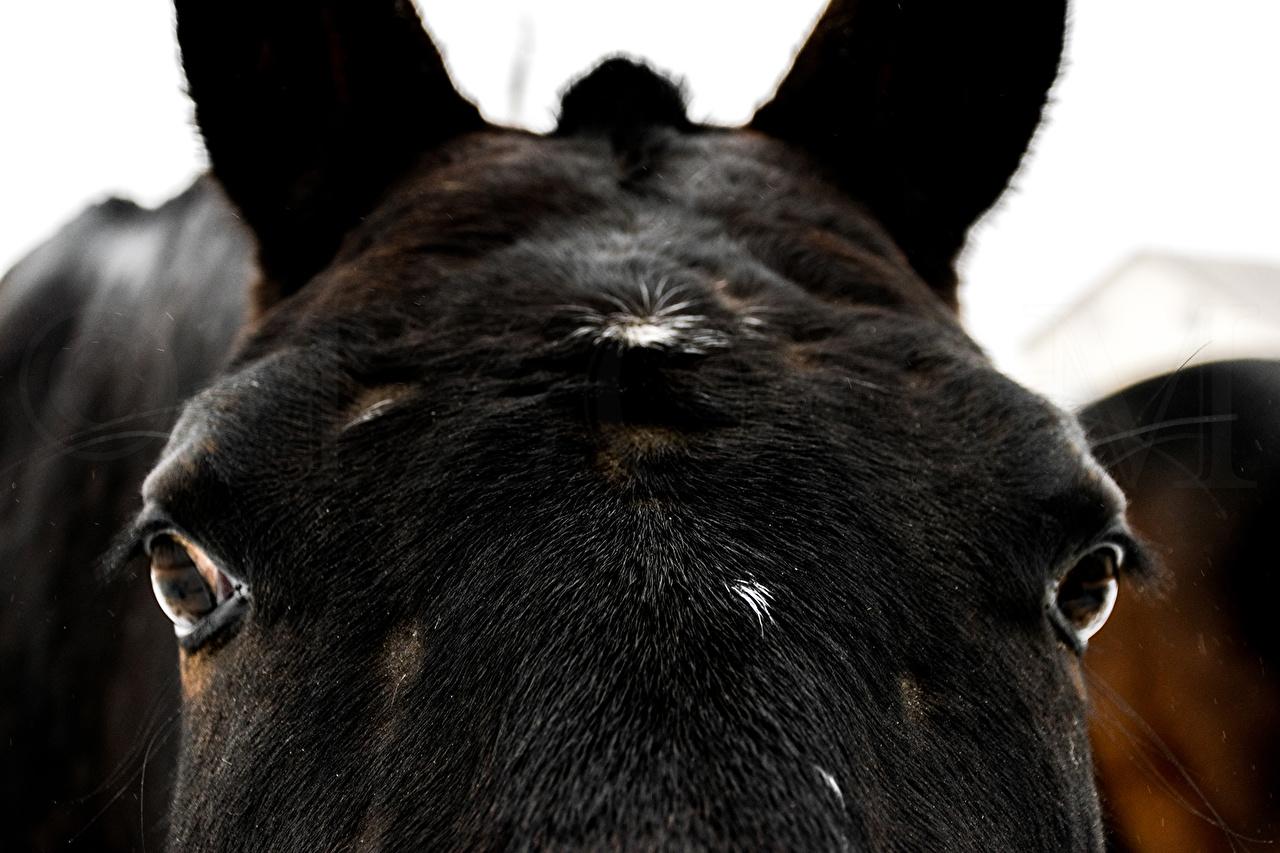 Achtergrond Paarden macrofotografie Hoofd Dieren van dichtbij paard Macro Close-up een dier