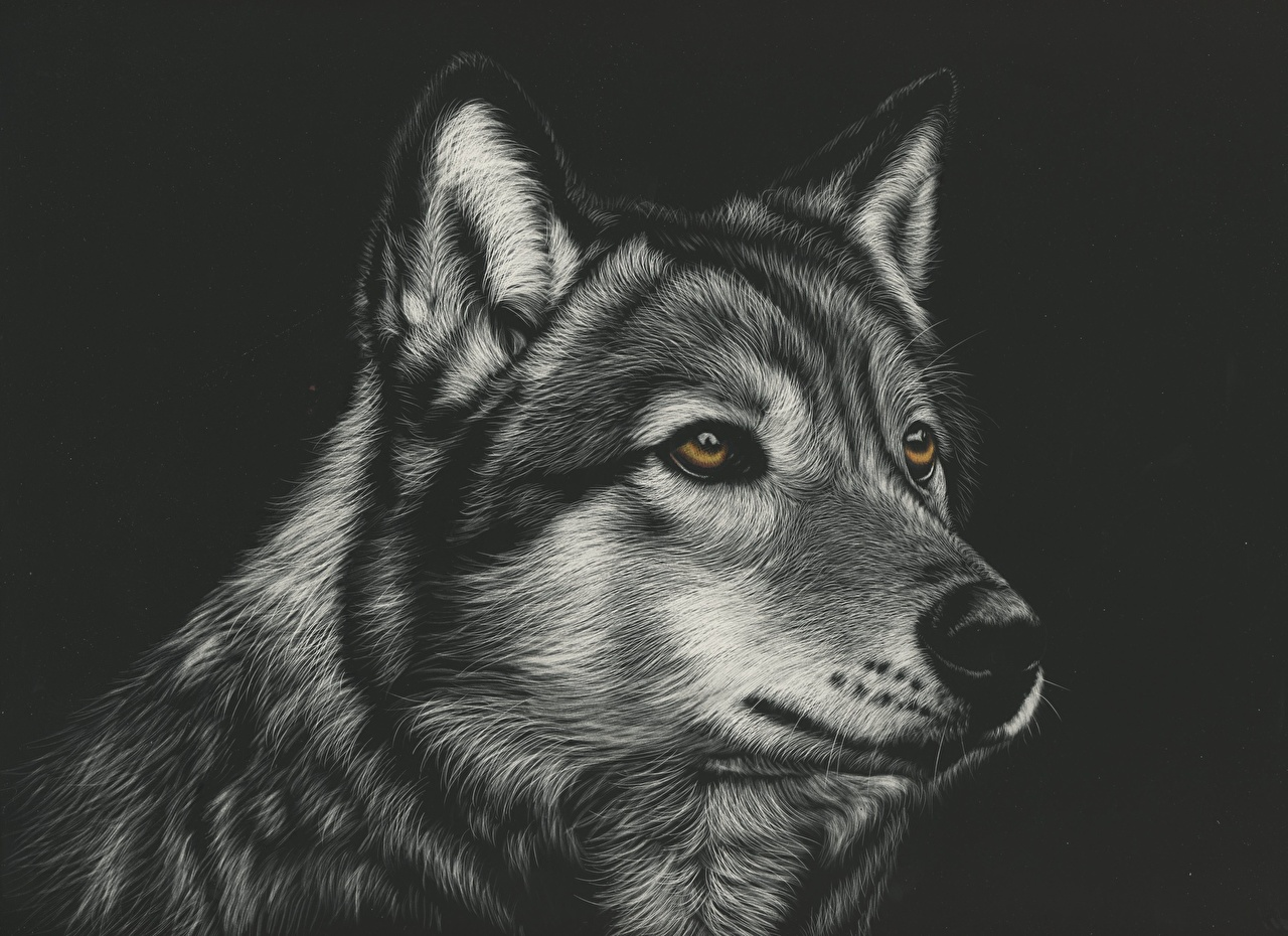 Wallpaper Wolves Black And White Head Animal Painting Art Black