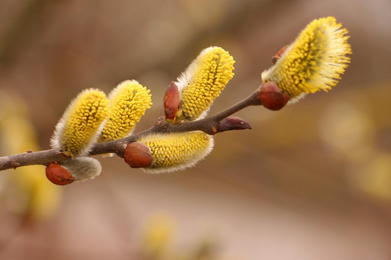 Fotos von unscharfer Hintergrund Blumen Ast hautnah Bokeh Blüte Nahaufnahme Großansicht