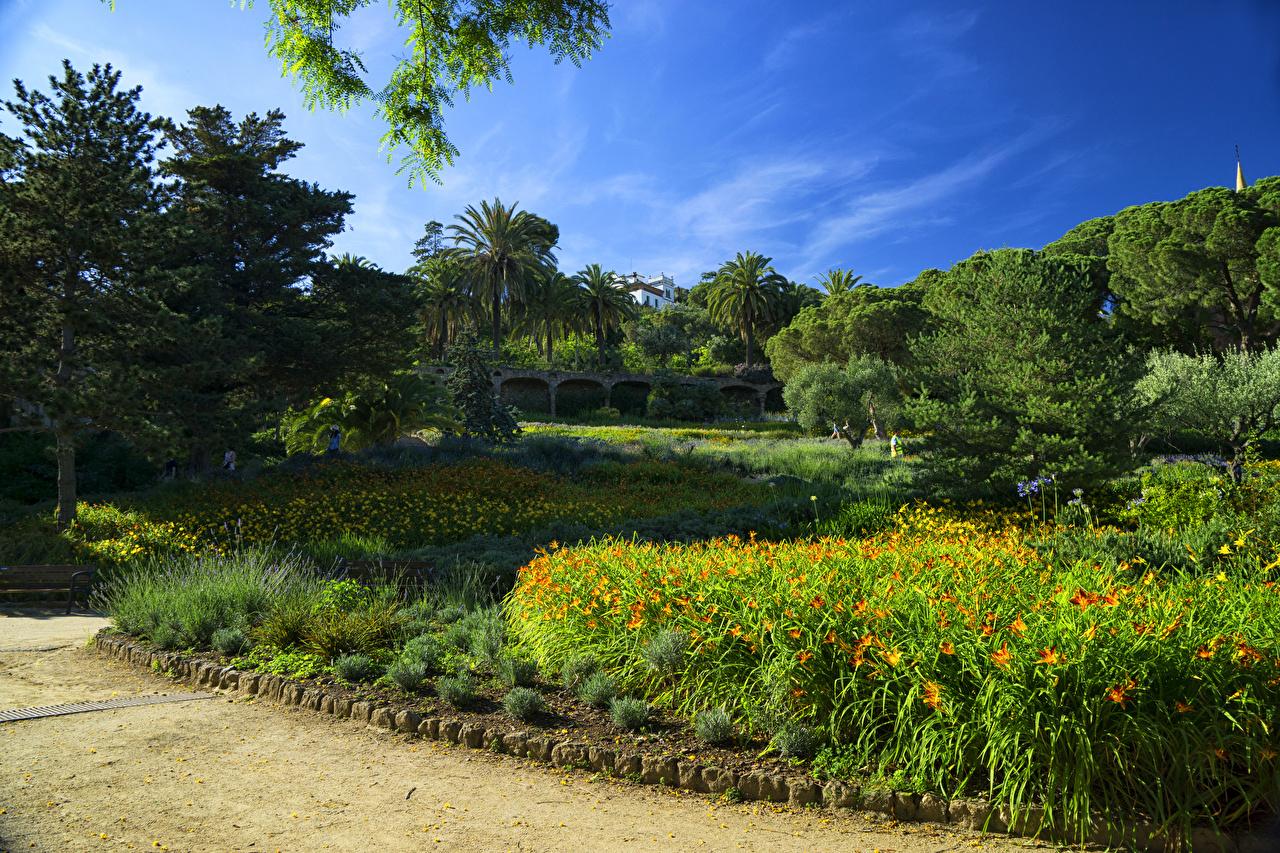Foto's Barcelona Spanje Natuur Parken Bomen park Een boom