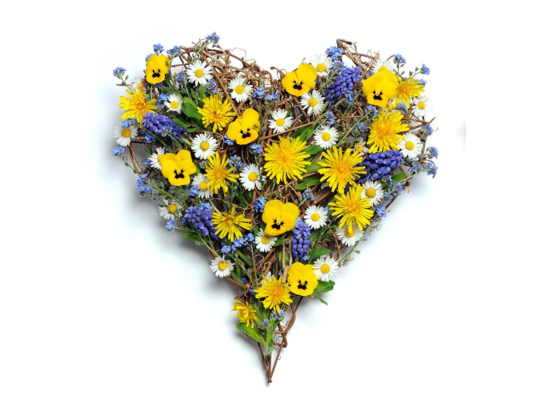 Desktop Wallpapers Heart Viola tricolor Flowers Digitalis matricaria Pansies heartsease Johnny Jump up flower Camomiles foxgloves
