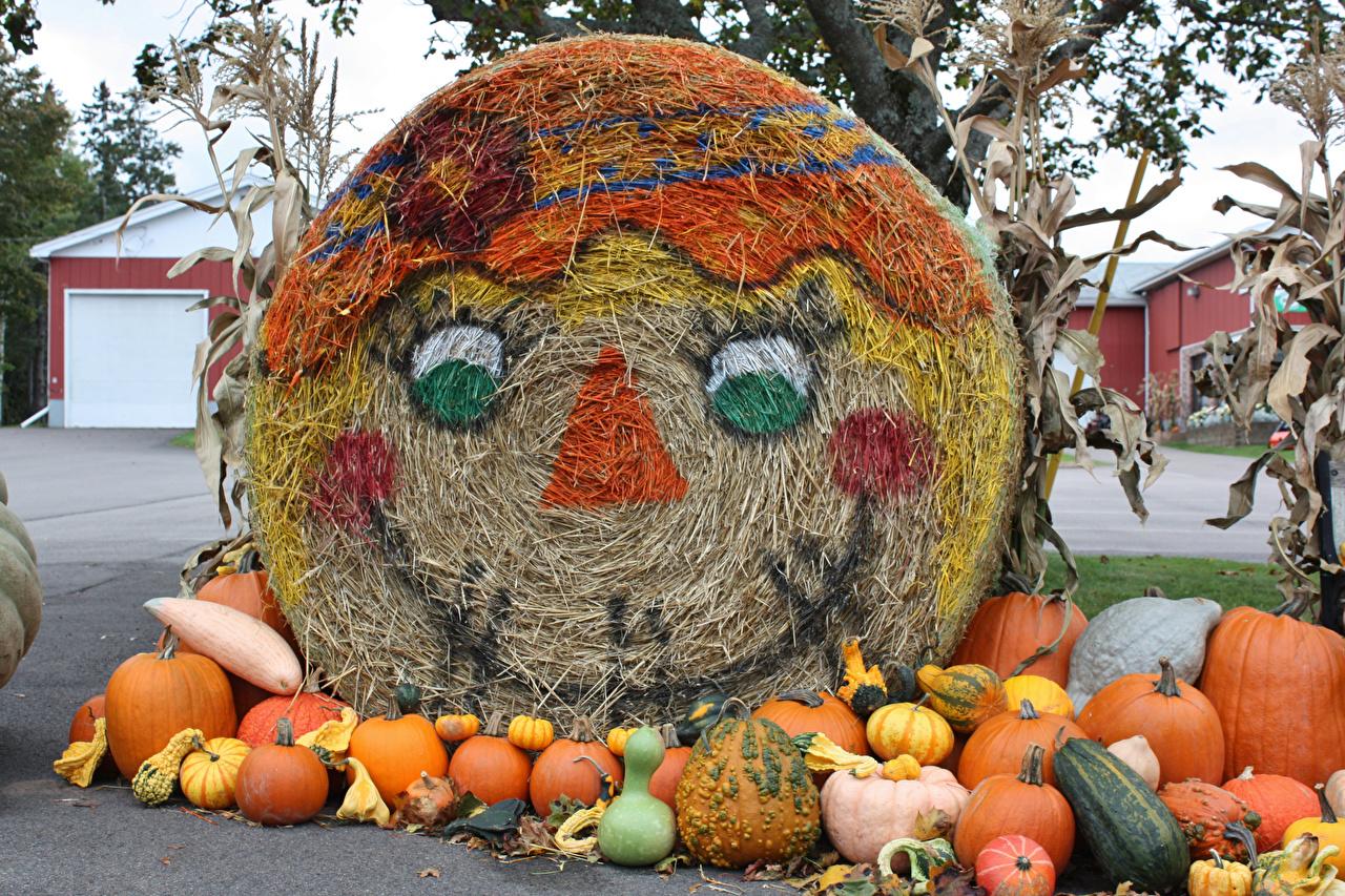 ,秋季,南瓜,表情符號,设计,乾草,大自然,