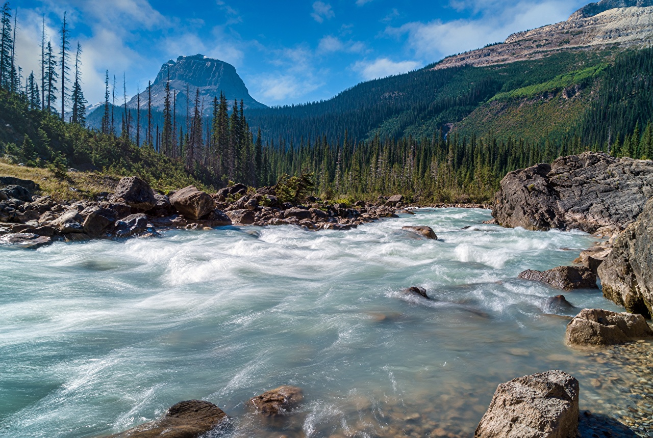 Image Canada Yoho National Park Nature mountain park Forests Scenery river stone Mountains Parks forest landscape photography Rivers Stones