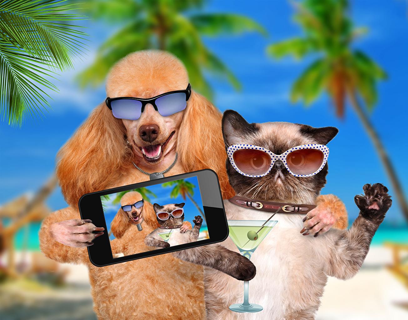 Fonds d'ecran Chien Chat domestique Lunettes Smartphone Caniche Selfie Drole Animaux Humour ...