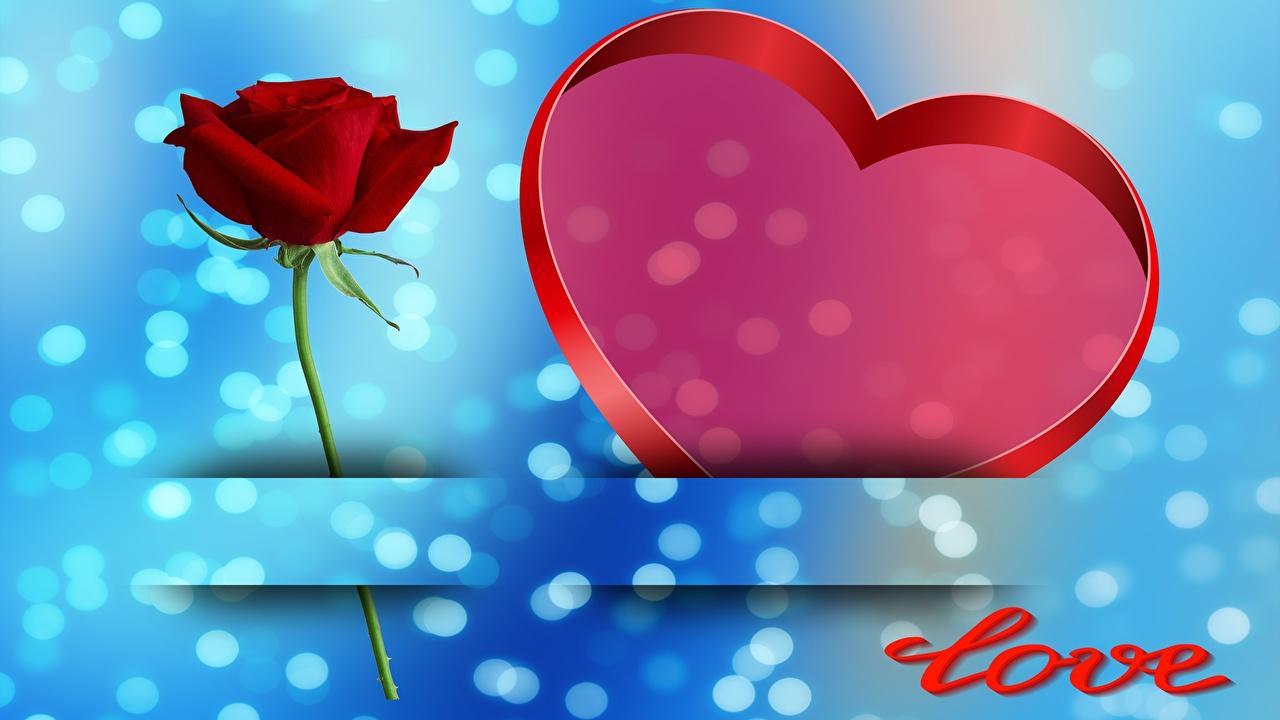 Обои для рабочего стола День всех влюблённых Английский Сердце Розы Шаблон поздравительной открытки День святого Валентина английская инглийские серце сердца сердечко роза