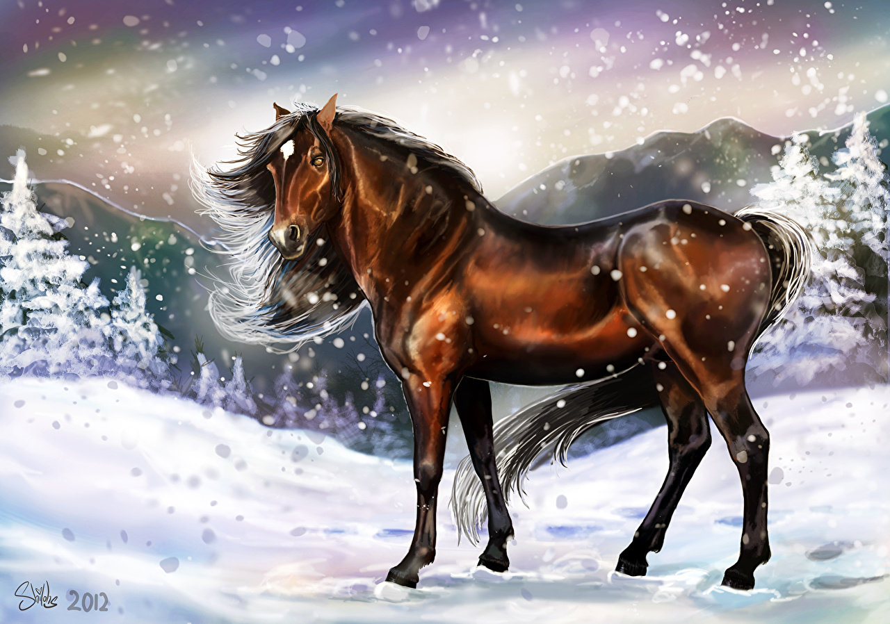 Photos Horses Winter Snowflakes Snow Animals