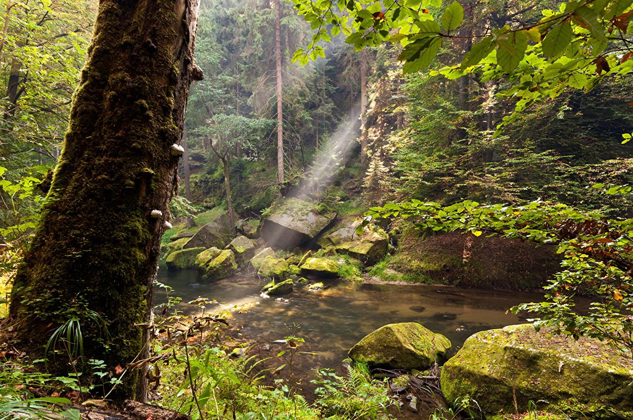 Immagine Natura foresta Tronco d'albero Acqua Foreste tronco di albero