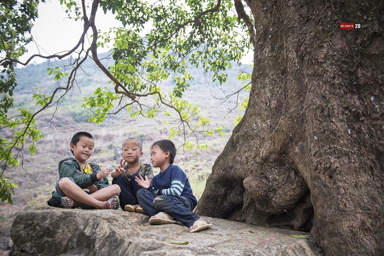 Fotos Junge Glatze Kinder Asiatische Ast Drei 3 Sitzend jungen kahle kahlköpfiger kind Asiaten asiatisches sitzt sitzen