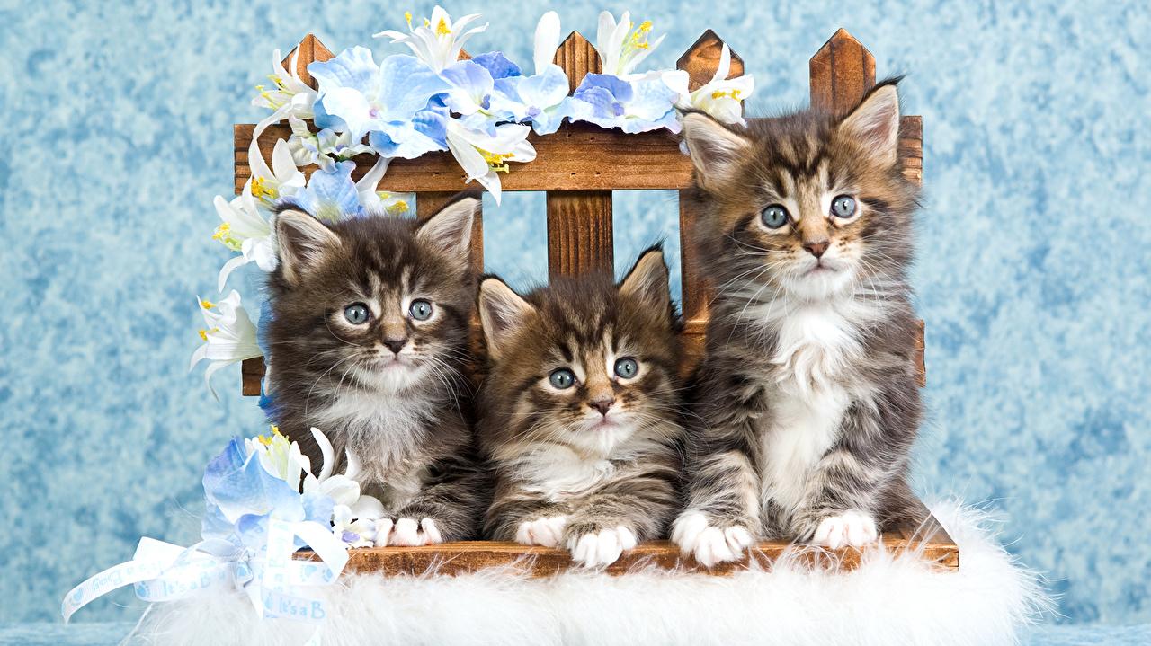 Image Kittens Cats Lilies Bench Three 3 Animals kitty cat cat lilium animal