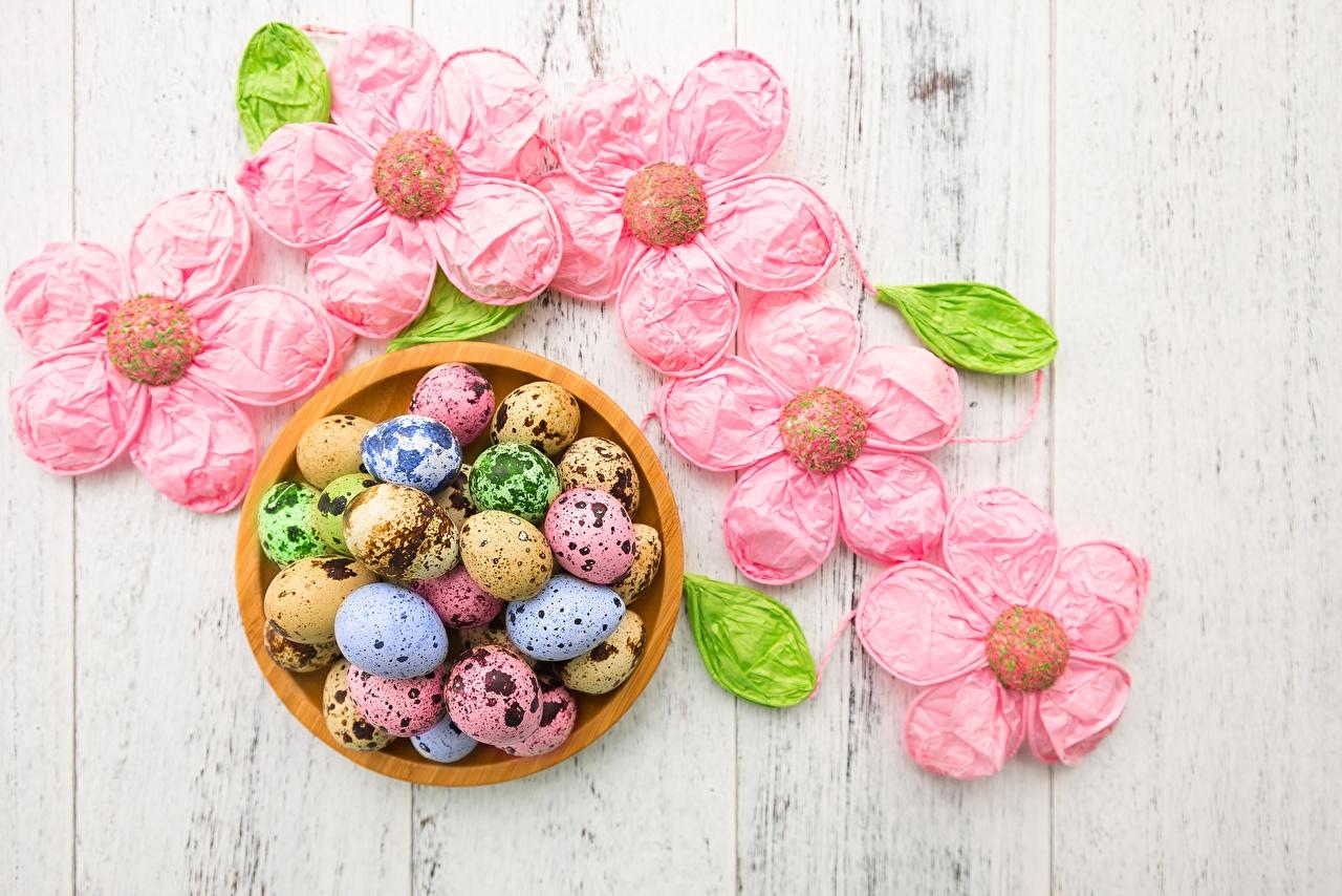 Fotos Ostern Mehrfarbige Ei Bunte eier