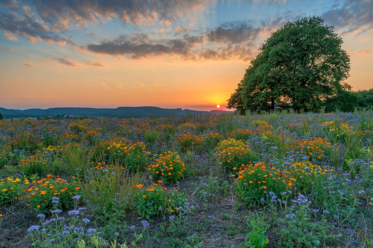 Bilder Deutschland Klausen Natur Sonne Felder Grünland Morgendämmerung und Sonnenuntergang Abend Bäume Acker Sonnenaufgänge und Sonnenuntergänge