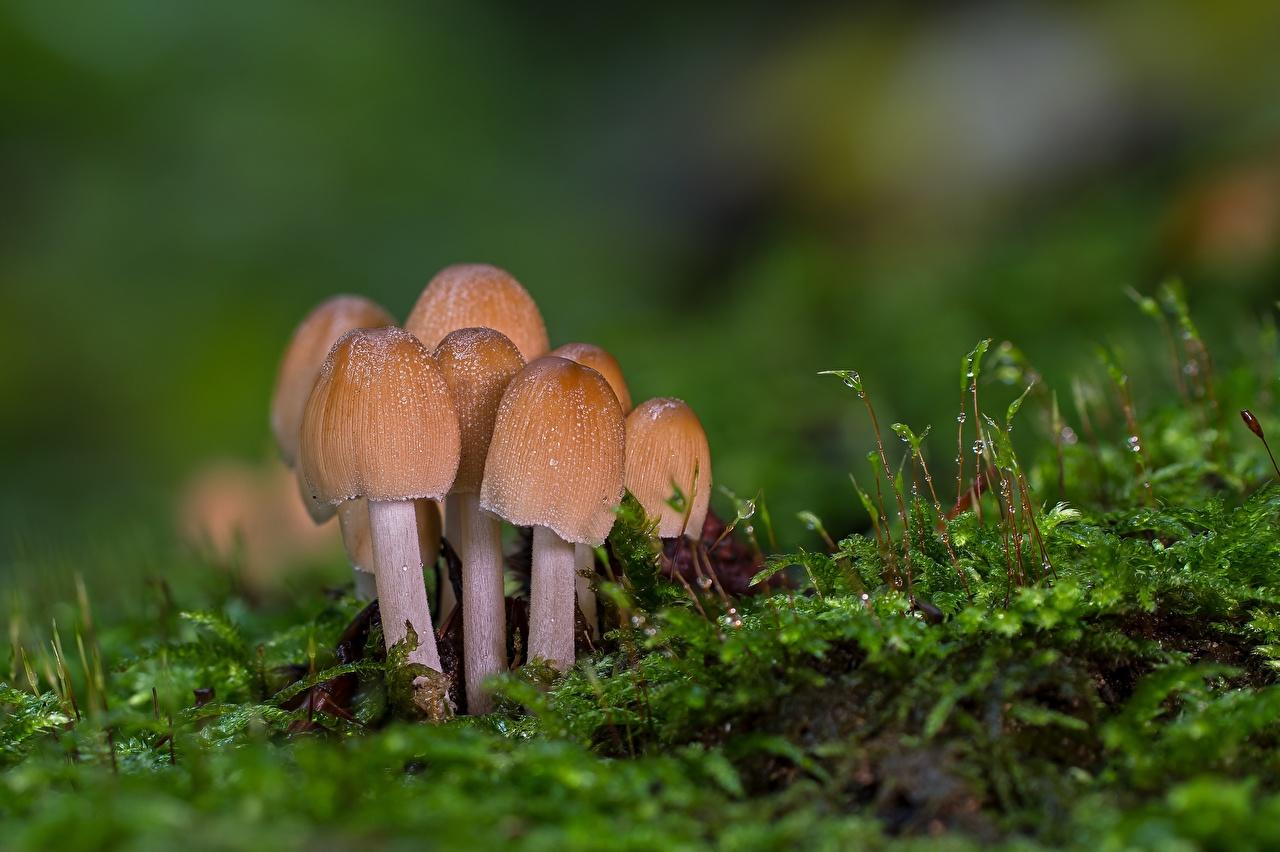 Fotos von Bokeh Natur Laubmoose Pilze Natur unscharfer Hintergrund