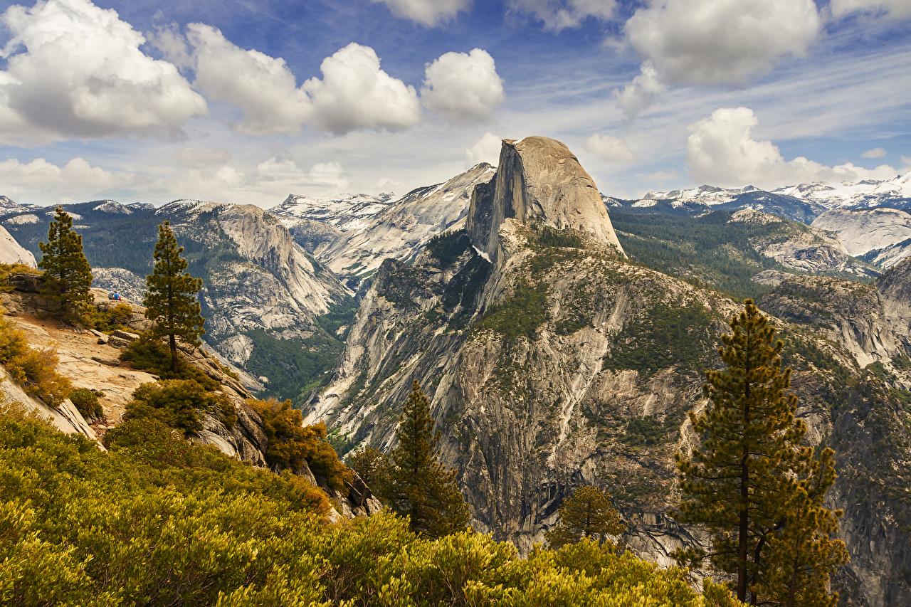 Image Yosemite USA Nature Spruce Mountains Parks