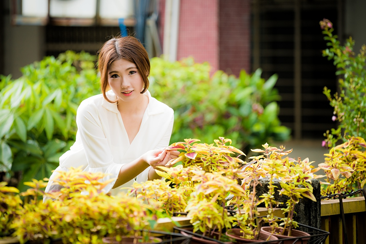 Desktop Wallpapers Brown haired blurred background Girls Asian Shrubs Glance Bokeh female young woman Asiatic Bush Staring
