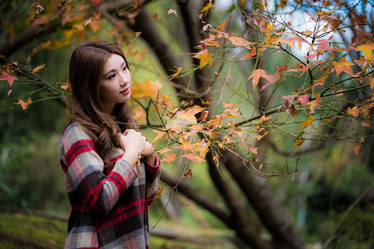 Foto Braunhaarige Herbst Mädchens Asiaten Ast Braune Haare junge frau junge Frauen Asiatische asiatisches