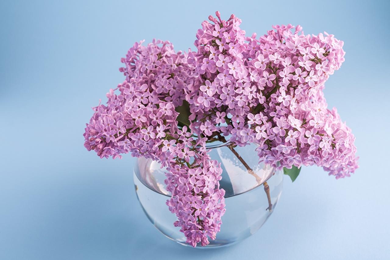 Wallpaper bouquet flower Syringa Vase Branches Bouquets Lilac Flowers