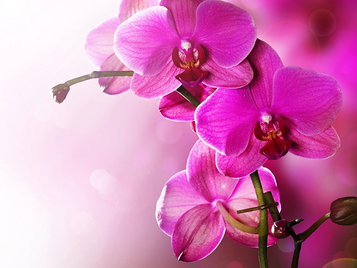 Bilder von Orchideen Blumen Großansicht Orchidee Blüte hautnah Nahaufnahme