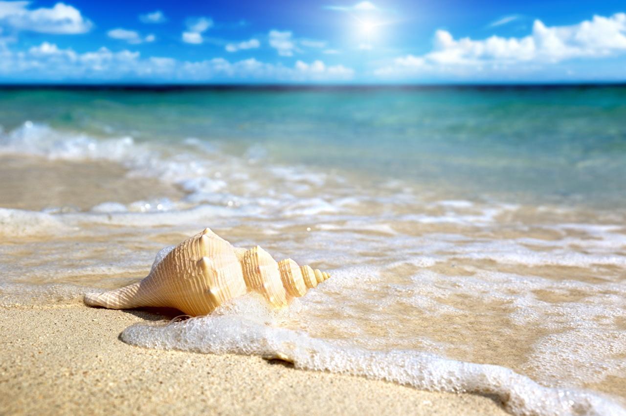 Estudio revela que playas de arena podrían desaparecer para fines de siglo
