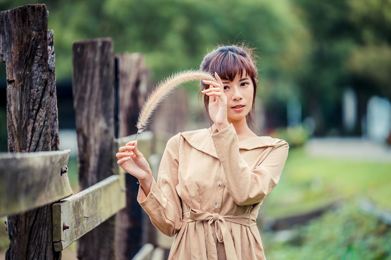 Foto Braunhaarige Bokeh posiert junge frau Federn Asiaten Hand Blick Braune Haare unscharfer Hintergrund Pose Mädchens junge Frauen Asiatische asiatisches Starren