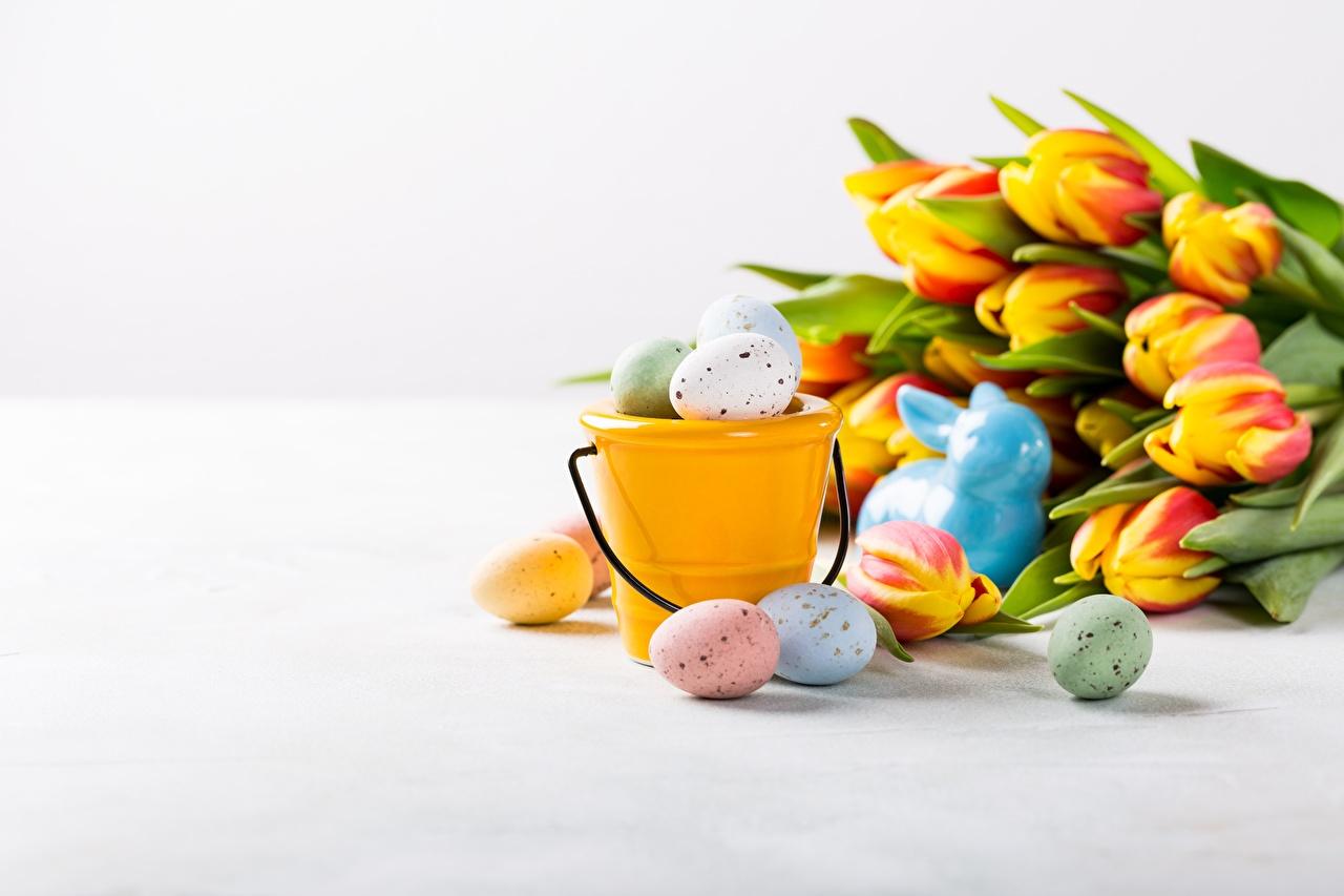 Image Easter egg Tulips Bucket Flowers Eggs tulip flower