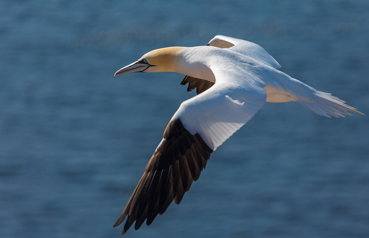 Image bird Gull Flight animal Birds seagulls Animals