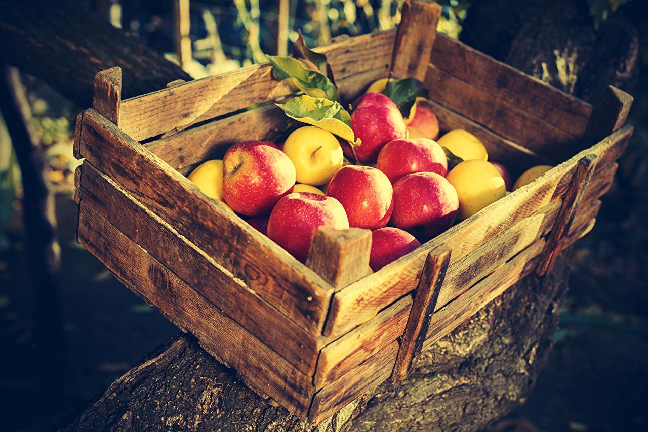 Fotos Äpfel Lebensmittel