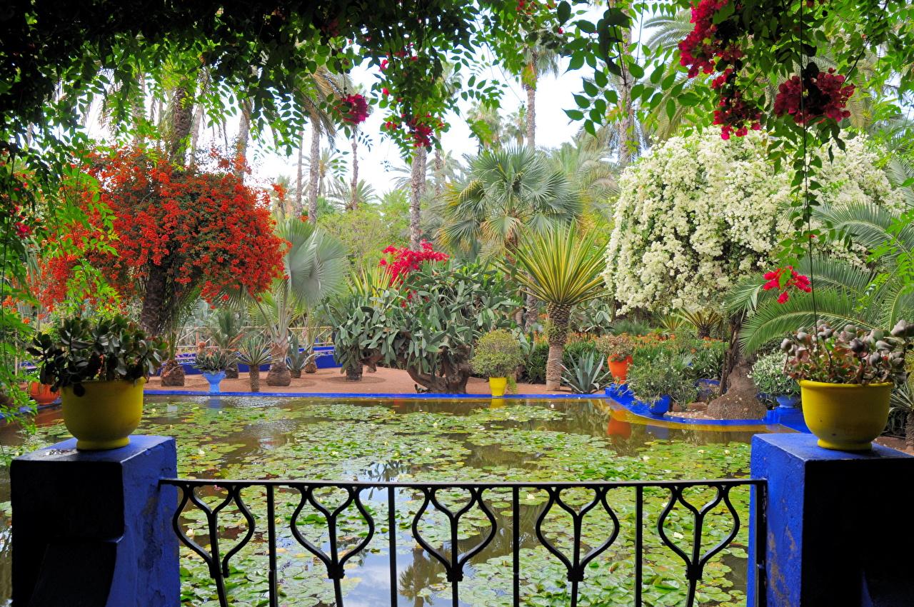 Fotos Morocco Marrakech Jardin Majorelle Natur Teich Garten