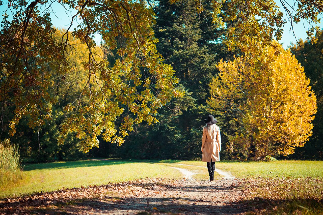 Desktop Hintergrundbilder Blatt Weg Natur Herbst junge frau Spaziergang Hinten Blattwerk geht gehen Wanderung Mädchens junge Frauen
