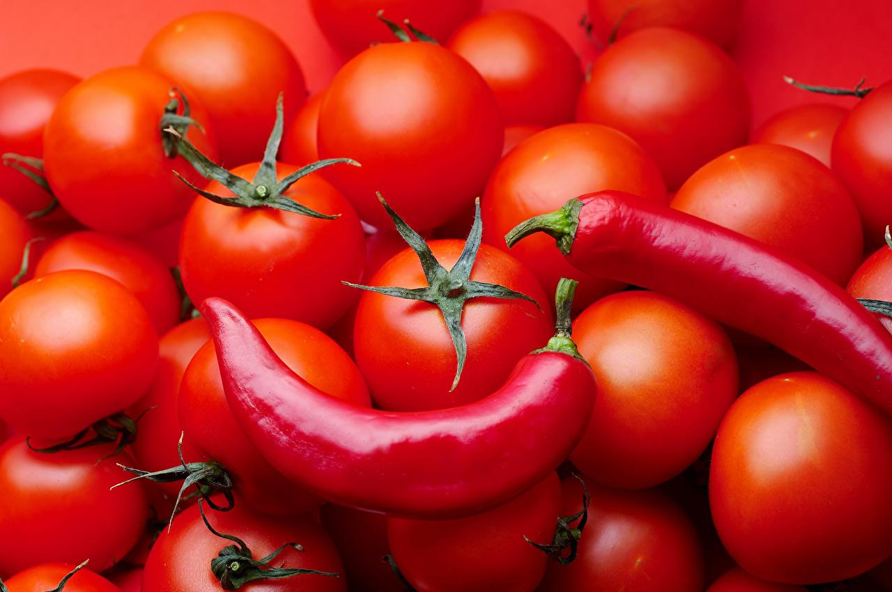 Fotos von Rot Tomate Chili Pfeffer Lebensmittel