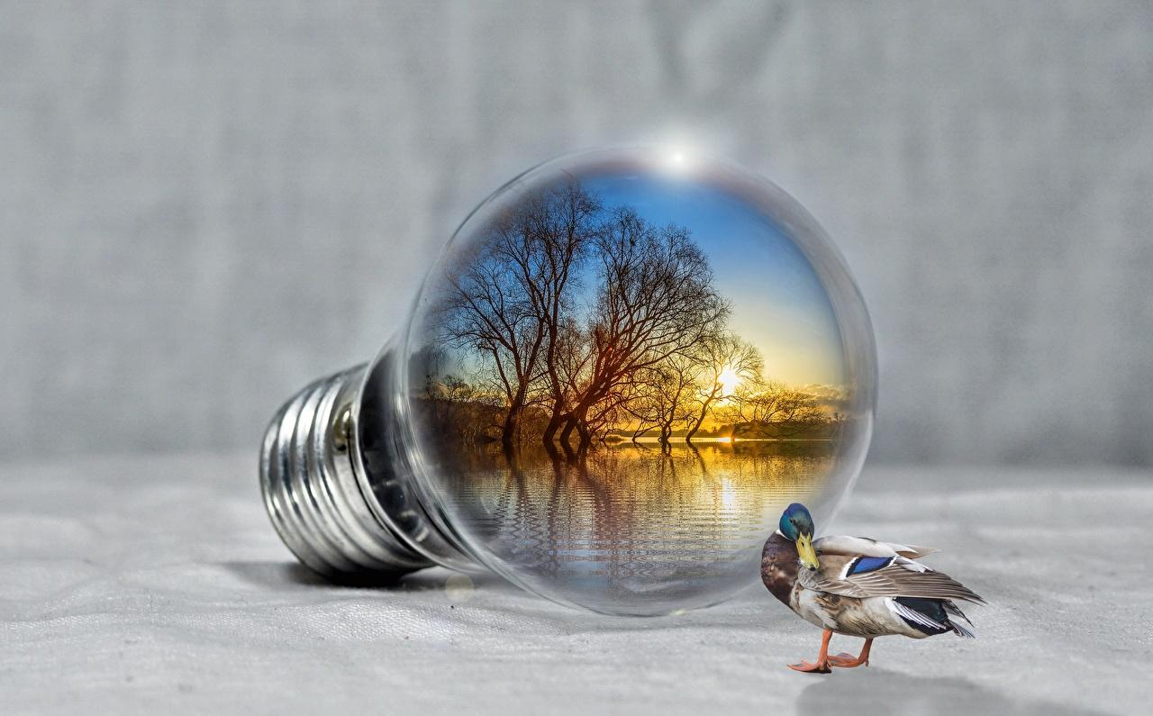 Photos Ducks Light bulb Lake Creative Animals duck animal