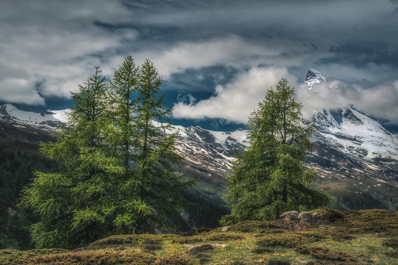 Bilder von Alpen Schweiz Zermatt Berg HDRI Natur Fichten Himmel Wolke HDR Gebirge