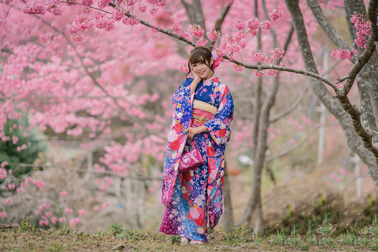 Bakgrunnsbilder til skrivebordet Sakura Smil Bokeh Kimono ung kvinne Asiater uklar bakgrunn Unge kvinner asiatisk