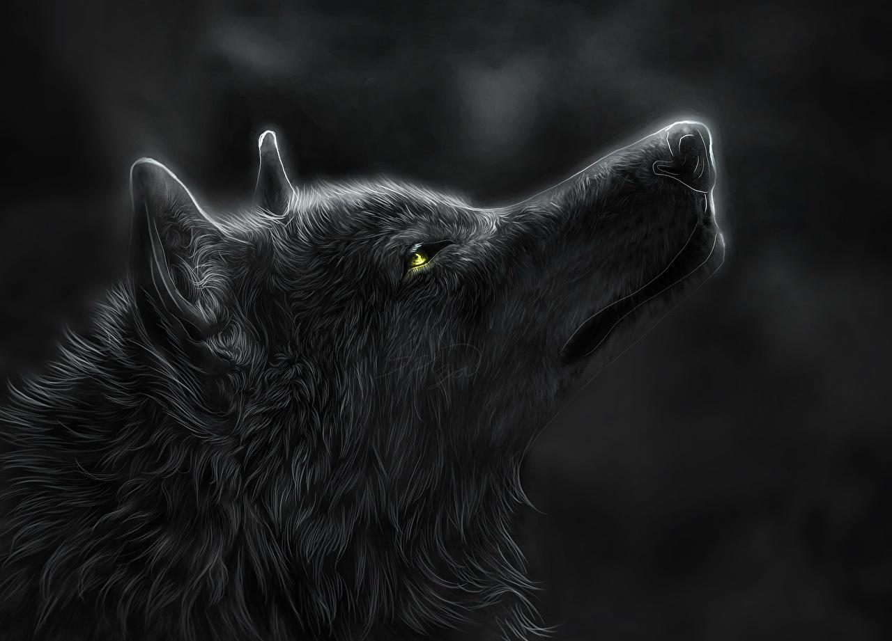 壁紙 狼 绘制壁纸 头 晚上 側視圖 動物 下载 照片