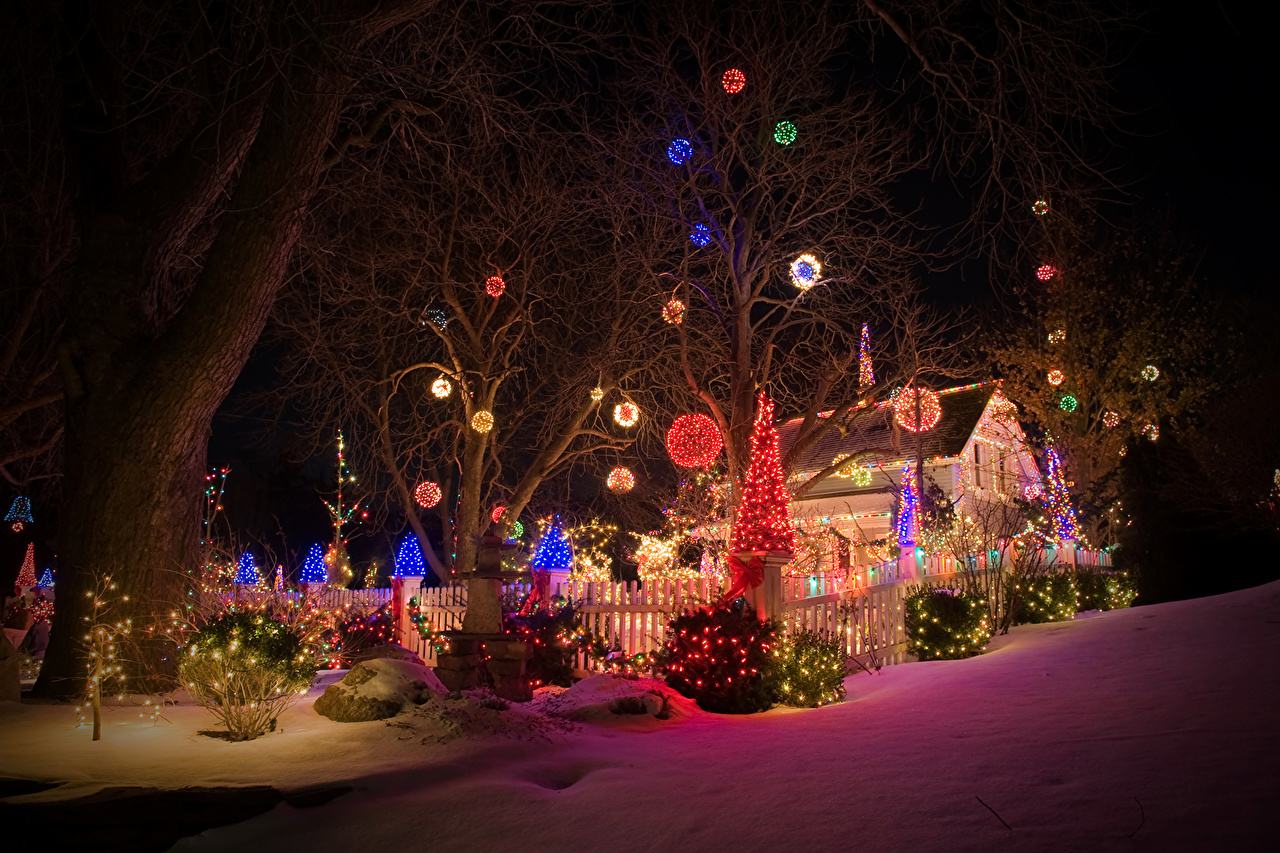 Christmas Bush Lights.Picture Christmas New Year Tree Snow Night Time Fairy Lights
