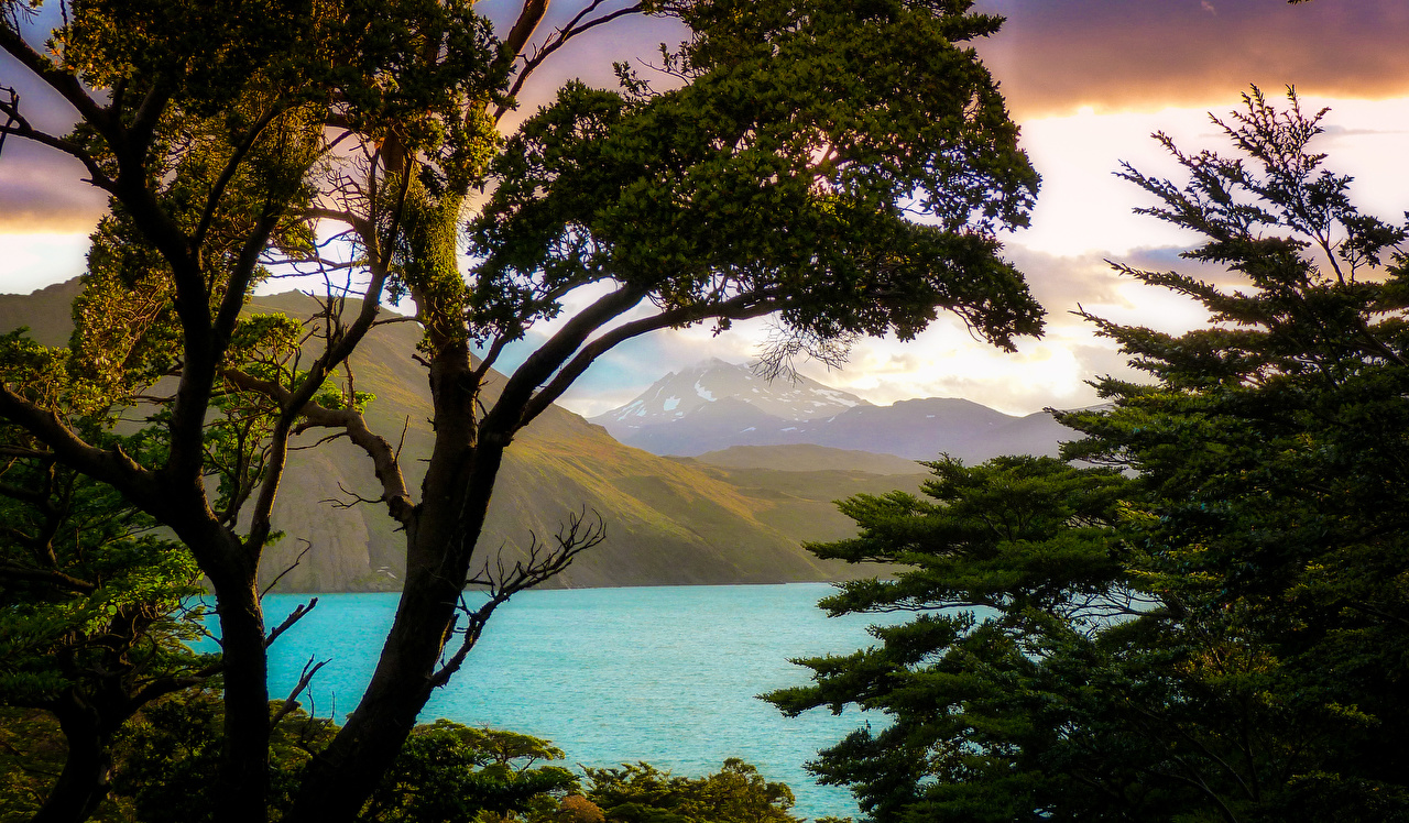Photo Chile Patagonia Nature Mountains Lake Branches