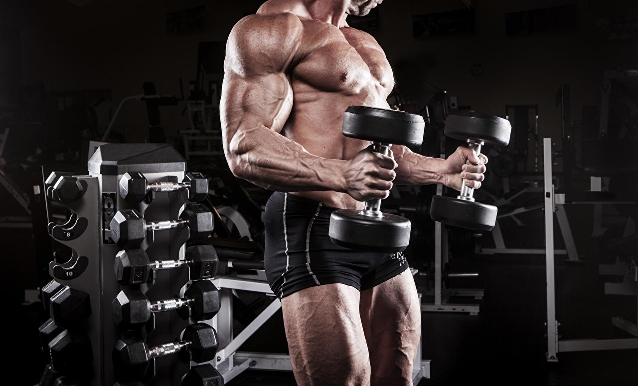 Bilder von Mann Muskeln Trainieren Hanteln sportliches Bodybuilding Hand Shorts Körperliche Aktivität Sport Hantel