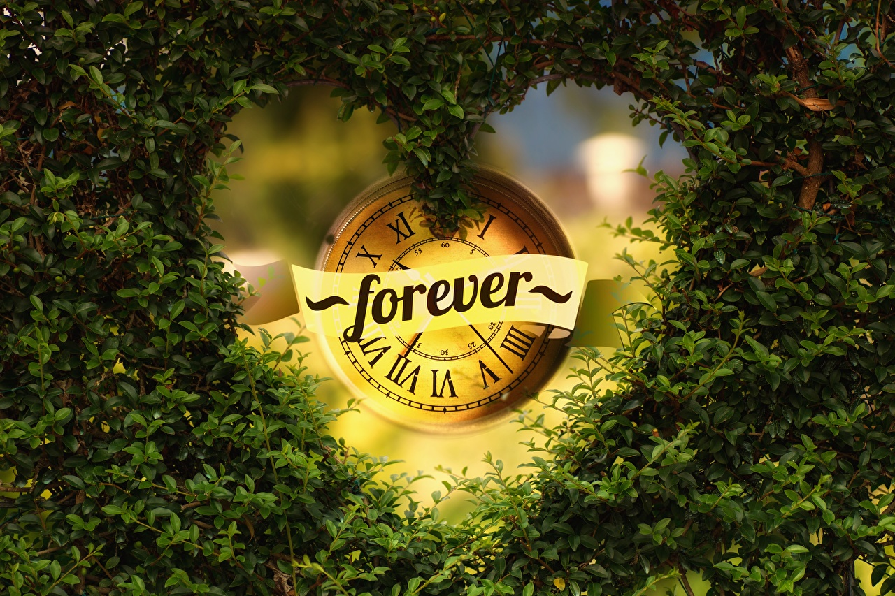 Photos Foliage English Heart FOREVER lettering Branches Clock face Leaf text Word - Lettering