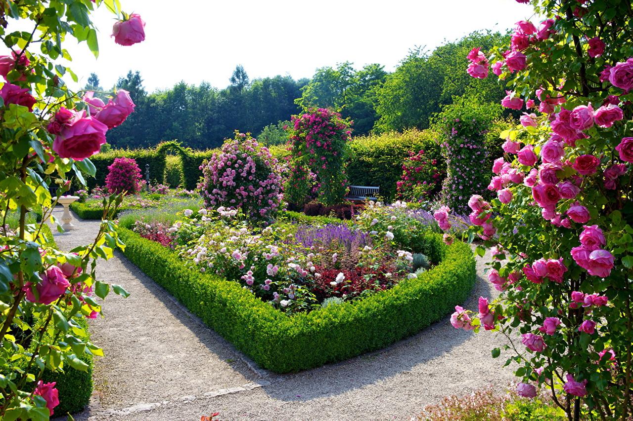 Picture Germany Rosengarten Merzig Nature Gardens