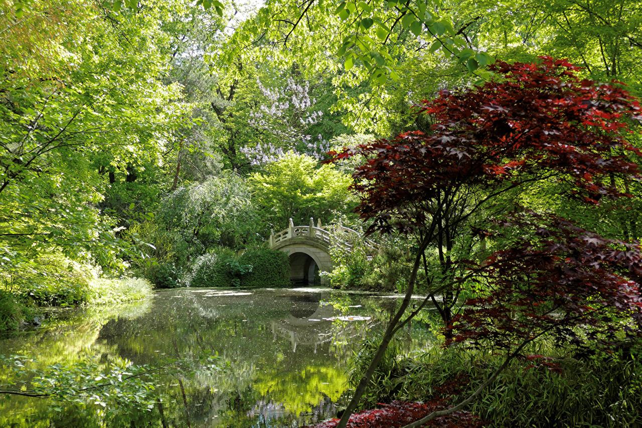 Immagini Germania Duisburg Ponti Natura parchi Stagno Alberi Arbusti ponte Parco Cespugli