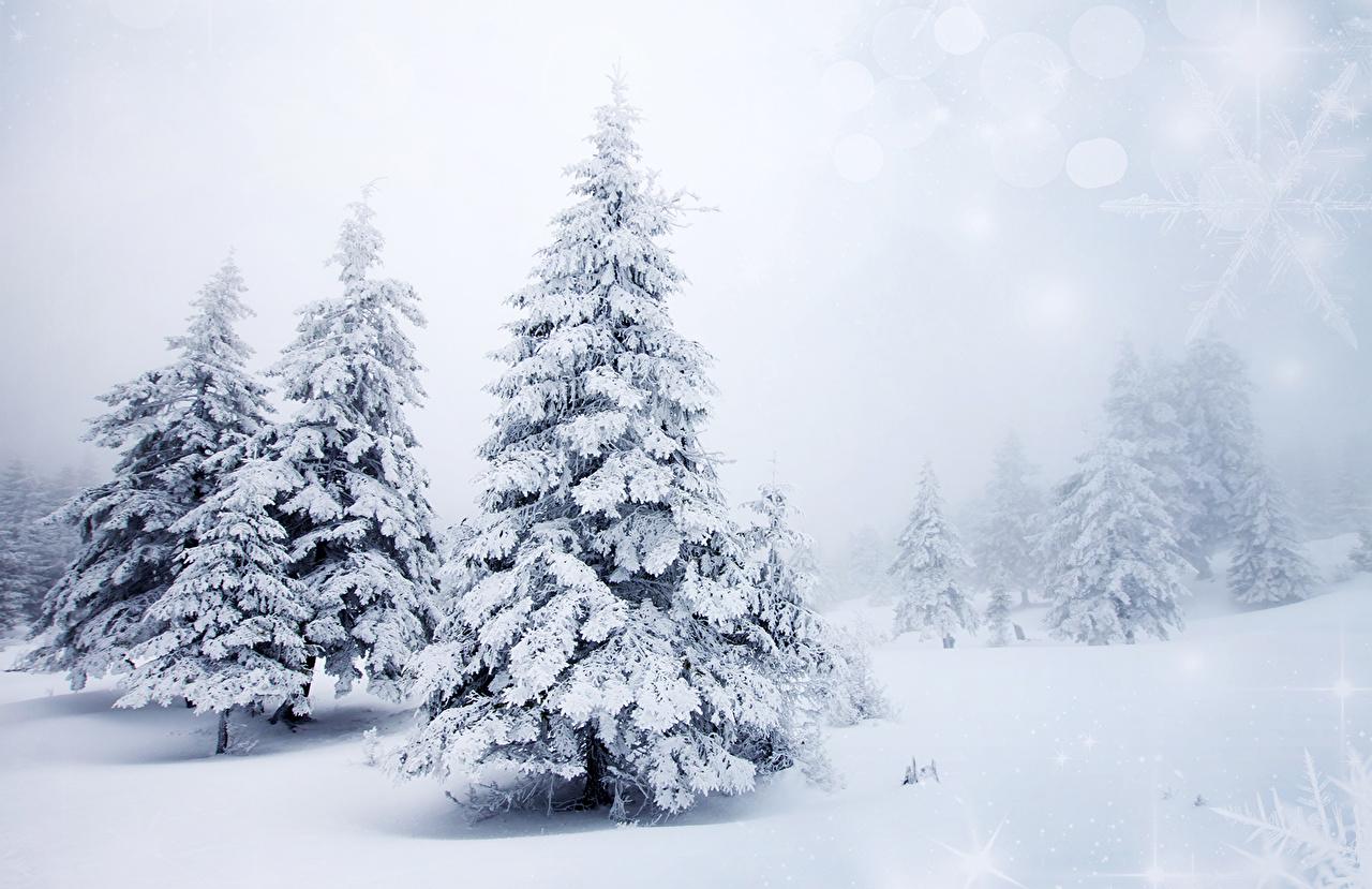 Photo Winter Nature Christmas Tree Snow Seasons