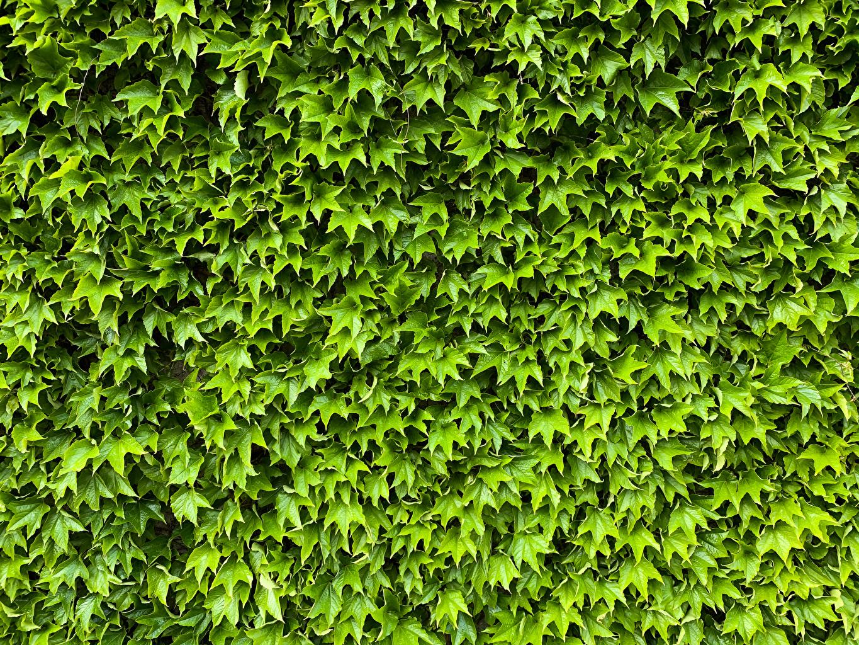 Fotos Blattwerk Natur Grün Viel Blatt