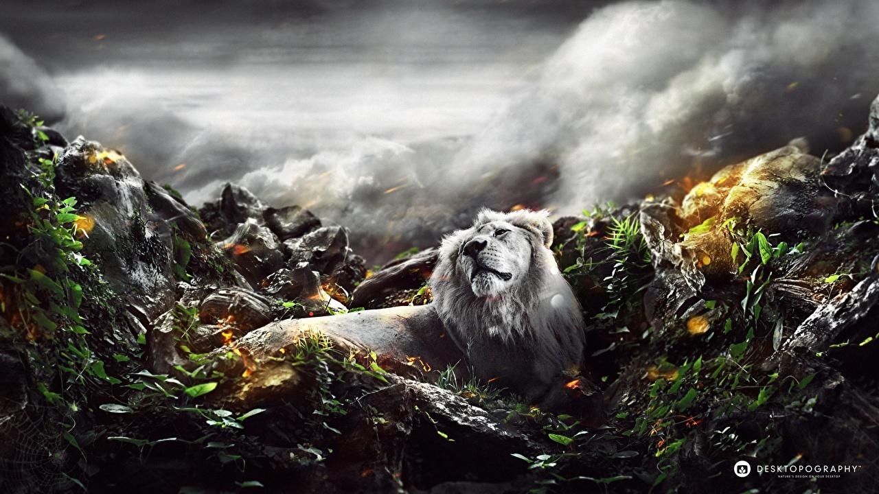 Foton Lejon Pantherinae Stenar Djur