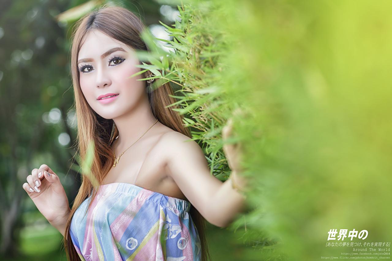 Фотография Шатенка боке девушка Азиаты смотрят шатенки Размытый фон Девушки молодая женщина молодые женщины азиатки азиатка Взгляд смотрит
