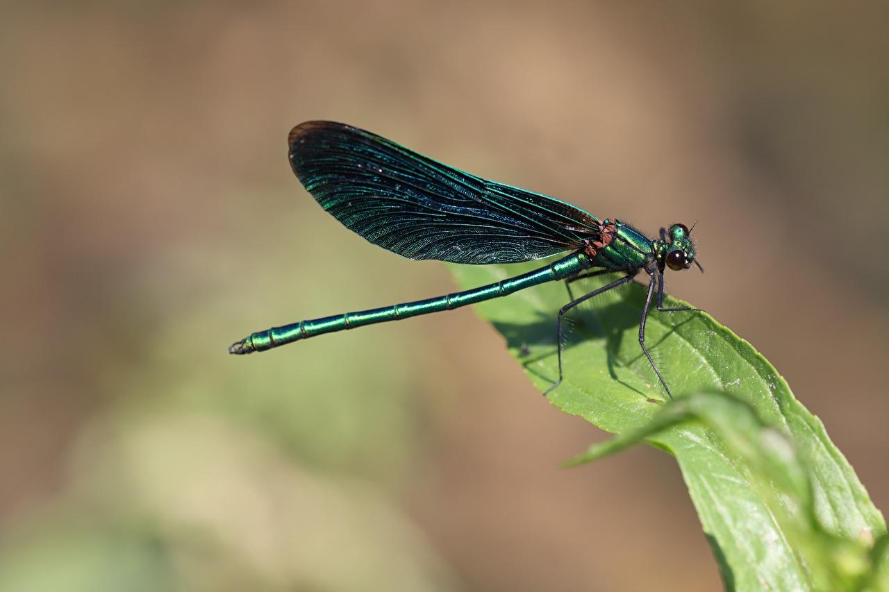Fotos Libellen Insekten Bokeh Tiere hautnah unscharfer Hintergrund ein Tier Nahaufnahme Großansicht