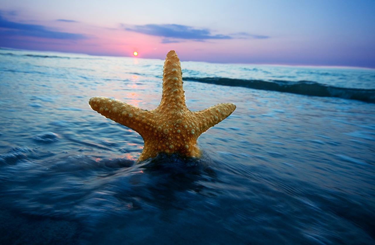 Afbeeldingen Zeesterren De zee Natuur Water De horizon zeester